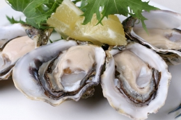 OYSTER COCTAIL